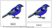 Bird Nomenclature Cards - Printable Montessori Learning Materials by Montessori Print Shop.