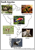 Animals of the Continents - Printable Montessori Learning Materials by Montessori Print Shop.