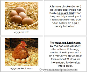 Chicken Life Cycle Book - Printable Montessori Learning Materials by Montessori Print Shop.