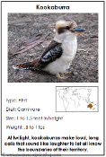 Animals of Australia/Oceania - Printable Montessori Learning Materials by Montessori Print Shop.