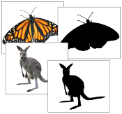 Animals and Silhouette Cards - Printable Montessori Materials