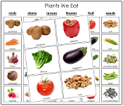 Plants We Eat - Printable Montessori science materials by Montessori Print Shop.