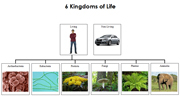 Six Kingdoms of Life Charts - Printable Montessori Learning Materials by Montessori Print Shop.