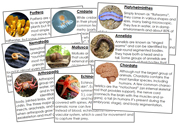 Animal Kingdom Information Cards - Printable Montessori science materials by Montessori Print Shop.