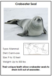 Animals of Antarctica - Printable Montessori Learning Materials by Montessori Print Shop.