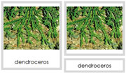 Plant Division: Anthocerotophyta - Printable Montessori Plant Kingdom Cards by Montessori Print Shop.