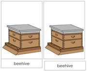 Beehive Nomenclature Cards - Printable Montessori Nomenclature Materials by Montessori Print Shop.