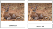 Big Cat Cards - Printable Montessori Classified Cards by Montessori Print Shop.