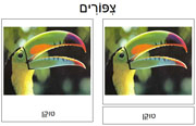 Bird Cards in Hebrew - Printable Montessori Hebrew Materials for home and school.