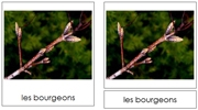 French Summer Cards - Printable French Montessori Learning Materials for home and school.