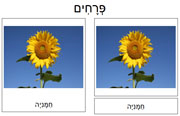 Flower Cards in Hebrew - Printable Montessori Hebrew Materials for home and school.
