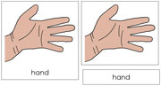 Hand Nomenclature Cards (Simple) - Printable Montessori Learning Materials by Montessori Print Shop.