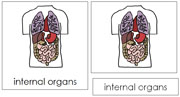 Internal Organs Nomenclature Cards - Printable Montessori Learning Materials by Montessori Print Shop.