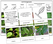 Leaf Arrangements - Printable Montessori Learning Materials by Montessori Print Shop.