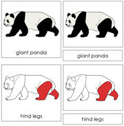 Giant Panda Nomenclature Cards (red) - Printable Montessori Learning Materials by Montessori Print Shop.