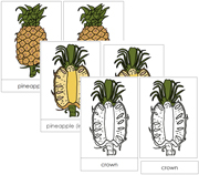 Pineapple Nomenclature Cards - Printable Montessori Nomenclature Materials by Montessori Print Shop.