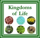 The Six Kingdoms of Life - Printable Montessori Materials