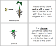 Seed to Plant Nomenclature Book - Printable Montessori Nomenclature Materials by Montessori Print Shop.