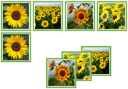 Sunflower Matching Cards - Printable Montessori Materials by Montessori Print Shop.