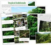 Tropical Rainforests - Printable Montessori Learning Materials by Montessori Print Shop.