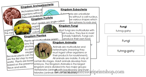 Six Kingdoms of Life Information Cards - Printable Montessori Animal Science materials
