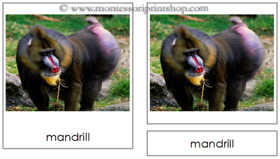 African Rainforest Animals - Montessori 3-Part Classified Cards - Printable Montessori Materials for home and school.