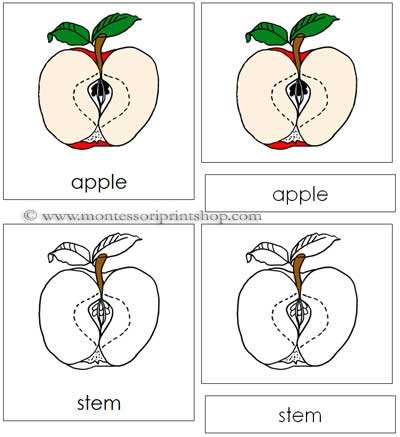 Apple Nomenclature Cards - Printable Montessori Nomenclature for Montessori Learning at home and school.