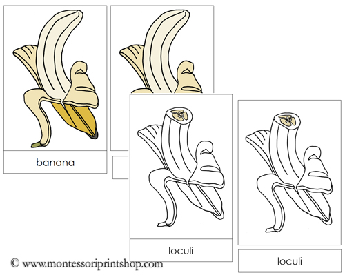 Banana Nomenclature Cards - Printable Montessori materials by Montessori Print Shop