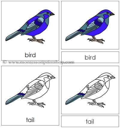 Bird Nomenclature Cards - Printable Montessori Nomenclature Materials for Montessori Learning at home and school.
