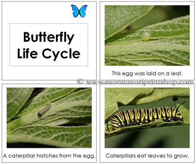 Butterfly Life Cycle Book - Printable Montessori Toddler Materials for Montessori Learning at home and school.