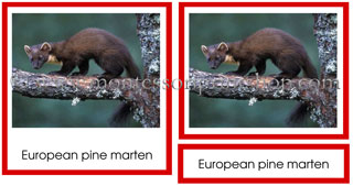 European Animals for Montessori Learning at home and school.