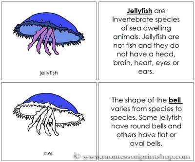 Jellyfish Nomenclature Book (Image from Montessori Print Shop)
