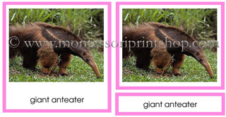 Animals of South America - Printable Montessori materials for Montessori Learning at home and school.