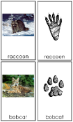 Animal Tracks - Printable Montessori Zoology Cards by Montessori Print Shop.