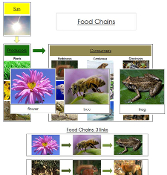 Food Chain Cards & Charts - Printable Montessori science materials by Montessori Print Shop.