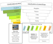 Six Kingdoms of Life Classification Concepts - Montessori Cards by Montessori Print Shop.