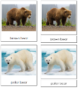Bear Cards - Printable Montessori Classified Cards by Montessori Print Shop.