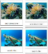 Coral Reef Animal Cards - Printable Montessori Classified Cards by Montessori Print Shop.