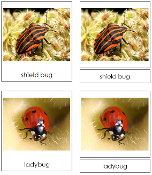 Insect Cards - Printable Montessori Classified Cards by Montessori Print Shop.