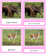 South American Animals - printable Montessori geography materials
