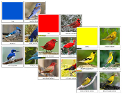 Bird Color Sorting Cards - Printable Montessori sensorial materials by Montessori Print Shop.
