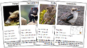 Animals of Australia/Oceania - Printable Montessori science materials by Montessori Print Shop.