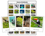 Classes of Vertebrates Sorting - Montessori Print Shop