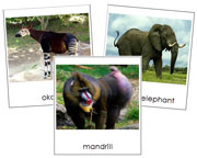 African Rainforest Animal Cards - Printable Montessori Classified Cards by Montessori Print Shop.