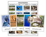 Animal Adaptations - Printable Montessori Science Cards by Montessori Print Shop.