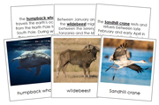 Animal Migration - Printable Montessori Science Cards by Montessori Print Shop.