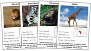 Animal Cards of Africa (Red) - Printable Montessori science materials by Montessori Print Shop.