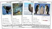 Animal Cards of Antarctica (Red) - Printable Montessori science materials by Montessori Print Shop.