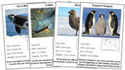 Animals of Antarctica - Printable Montessori science materials by Montessori Print Shop.