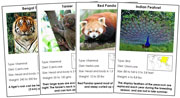 Animals of Asia - Printable Montessori science materials by Montessori Print Shop.